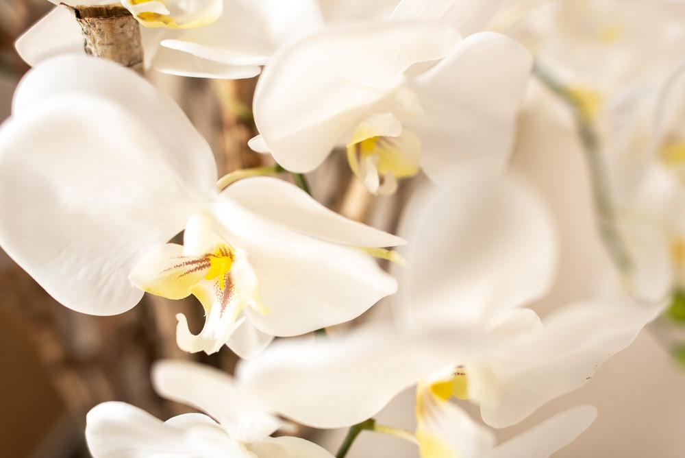 arredamenti e fiori b&b